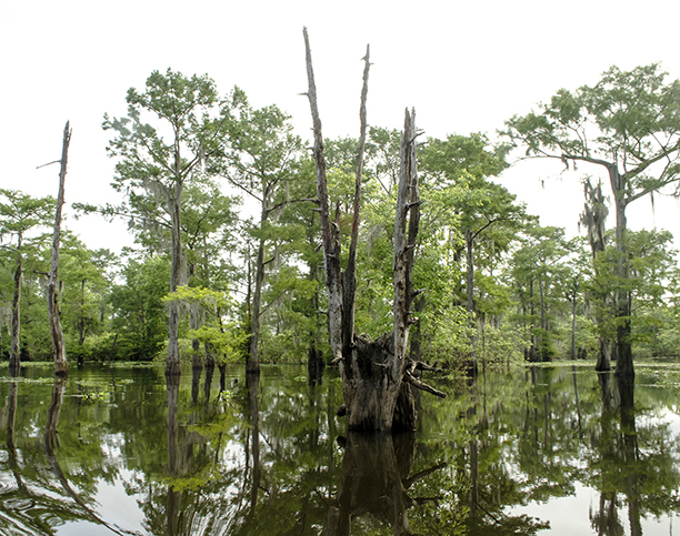 reflections in a Cajun Country swamp